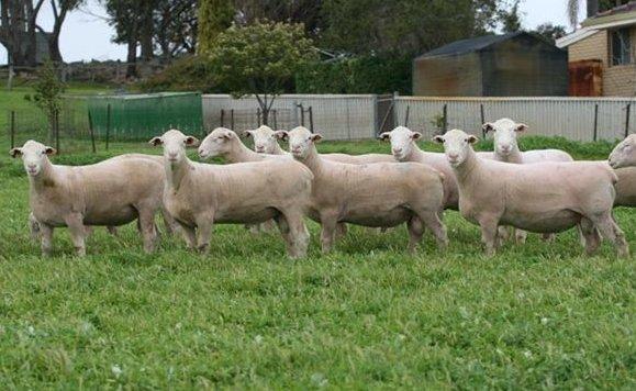 hillcroft farm
